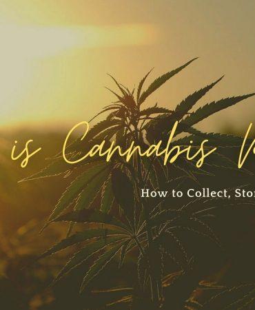 Cannabis Pollen